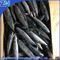 bonito congelado atún pescado en en china