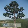 steel telecommunication natural pole