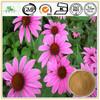 Natural Plant Extract Powder Echinacea Polyphenol