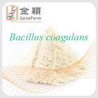 probiotic bacillus coagulans health supplement