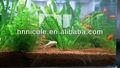 suelo de barro o arena o grava para el acuario