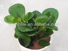 Love artificial plant and aqua breads love clay pellets organic fertilizer