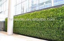 Green world!great green wall clay soil