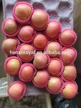 Shandong apple fuji