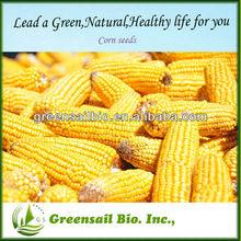 2014 maíz de buena calidad de semillas de maíz
