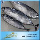 China Frozen Bonito Tuna Fish