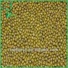 Bulk Mung Beans in Stock