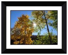 nuovo design nero telaio la luce del sole e alberi immagine decorativa