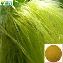 manufacturer supply 100% natural corn silk extract powder