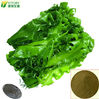 100% Pure Soluble Seaweed Extract Powder Fertilizer