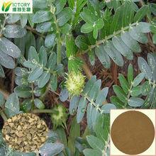 20%-95% Saponins pure natural Tribulus Terrestris Extract Powder