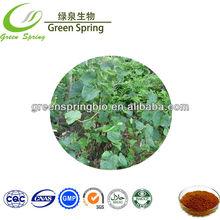 China wholesale Kava kava 30%/kava powder/fiji kava/kava kava extract herb medicine