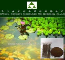 Best price Camellia or Tea seed Powder