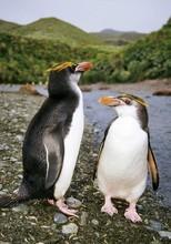 cute polan penguin picture making by lenticular 3d len sheet