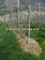 Agrochemical herbicida glifosato tc buena calidad/roundup