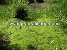 Herbicide Glyphosate IPA 62%SL