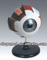 modelo de ojo humano