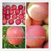 Best-selling fresh sweet fruit wholesale price china red juicy qinguan apple
