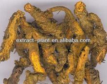 Coptis Root extract/ dried herbal Coptis powder
