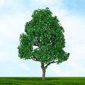 """Mp cenário - HO SCALE árvores - 70514 árvore de folha caduca 3 """" a 4 """" 2 / PK"""