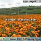 Orange powder & oil high quality 100% natural pot marigold extract powder(free samples)