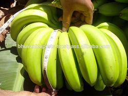Fresh Bananas/Cavendish/G9 from India!