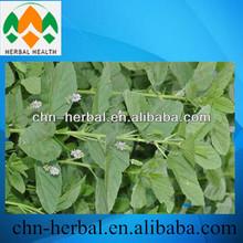 Qualidade natural erva extrato da planta Psoralea corylifolia p.E Cura vitiligo, Pelade