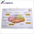 2014 fabricante chino de carteles educativos de diseño, a granel de impresión del cartel