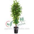 venda quente estilo vários artificial banyan tree bonsai para atacado