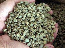 vietnam verde chicchi di caffè robusta