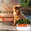 Alibaba Metal Buckle Engraved Personalized Nylon Dog Collars Wholesale