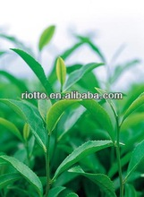 Natural green tea extract with Polyphenols 95~98% EGCG 50%~98% by HPLC/UV