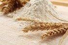 Fresh Wheat Flour Supplier in UAE/Dubai/Kuwait