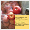 Paper bagged 100/113/125 china fresh qinguan apple names all fruit as an exporter and wholesale distributor