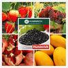 Humirich Shenyang 60HA+15FA+12K2O Potassium Humate Fulvic Acid Fertilizer