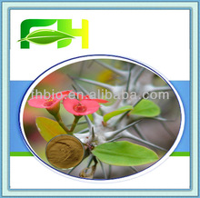 100% Natural Extract of Crown of Thorns