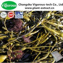 Organico ascophyllum nodosum estratto/ascophyllum nodosum estratto in polvere/ascophyllum nodosum
