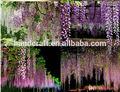 Nova chegada flores de glicínia artificial para decoração de casamento suprimentos