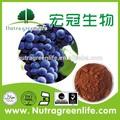 100% natural de semente de uva extrato 95%