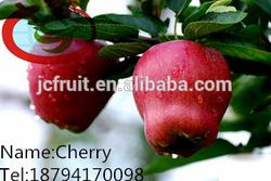 Huaniu Apple Companies Imported Fruit