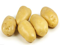 producers exporters fresh potatoes