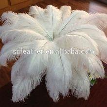 cheap ostrich feather