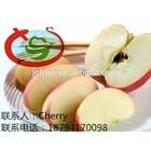 Custard Fresh Delicious Fuji Apple Fruit