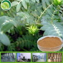 100% natural Tribulus Terrestris P.E /Saponins 40%-95%