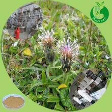 100% Organic Black Cohosh Powder/Black Cohosh P.E.