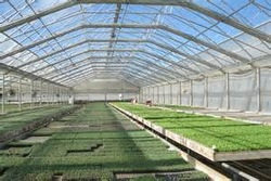 Transparent roofing tile for greenhouse