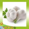 2014 new crop Fresh white garlic