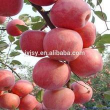 fresh apple for 2014 shandong