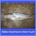 Atacado preços do peixe peixe bonito/congelados listrado de bonito frutosdomar