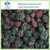 Frozen Blackberry Fruit in Bulk with Best Price